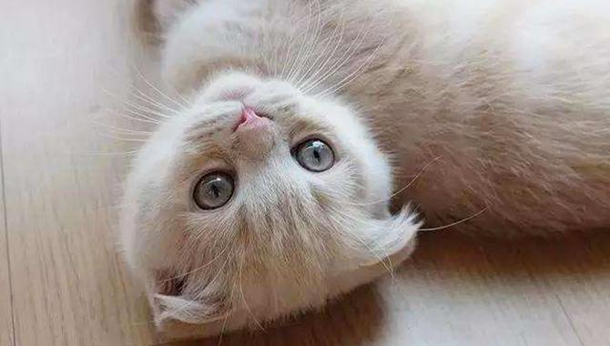 一只卖萌的小奶喵 简直太可爱了!